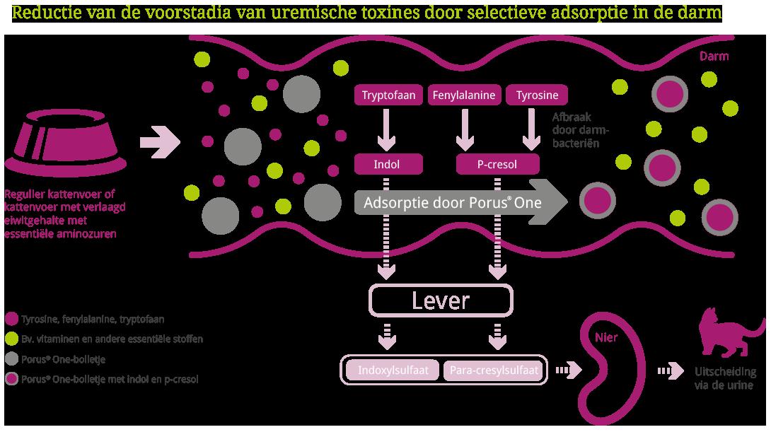 tierarzt-home-diagram-NL